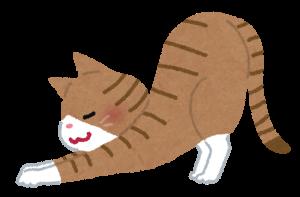 猫の背伸び